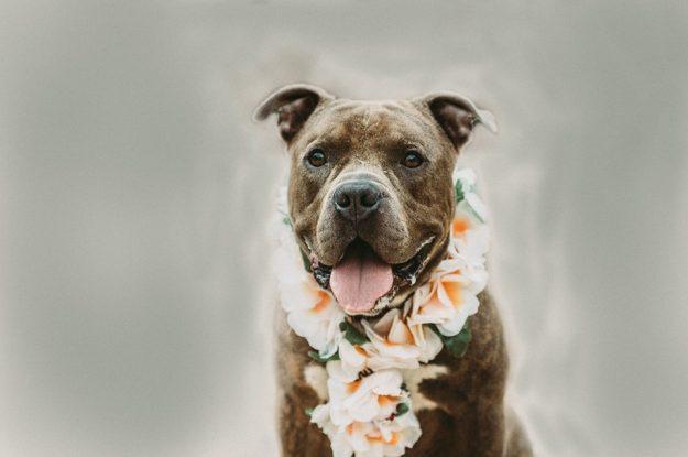 August Pet Adoption News