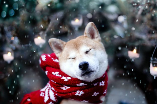 Be Mindful of Your Pets this Winter Season