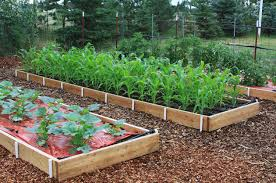 Think Spring: DIY Garden Beds